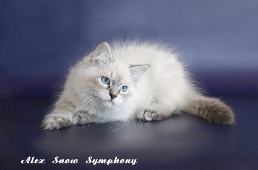 Alex Snow Symphony