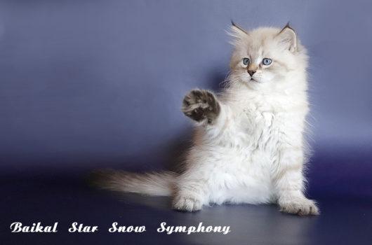 Baikal Star Snow Symphony
