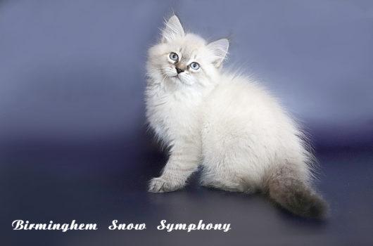 Birmingham  Snow Symphony