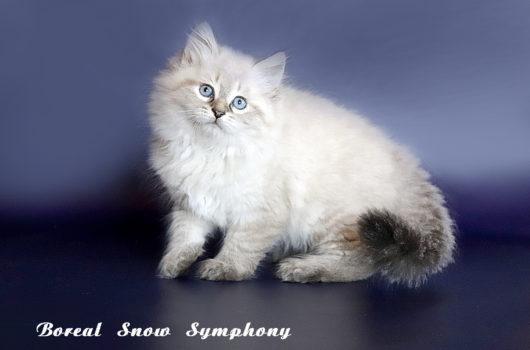 Вoreal Snow Symphony