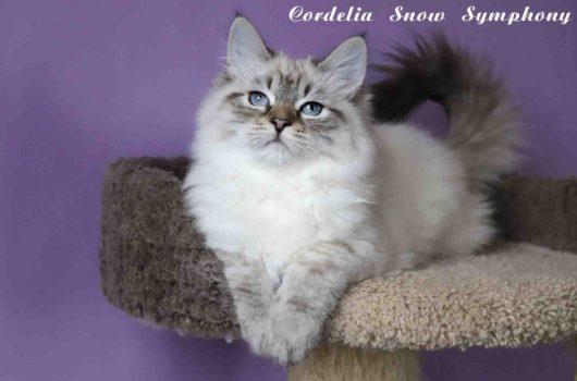 Cordelia  Snow Symphony