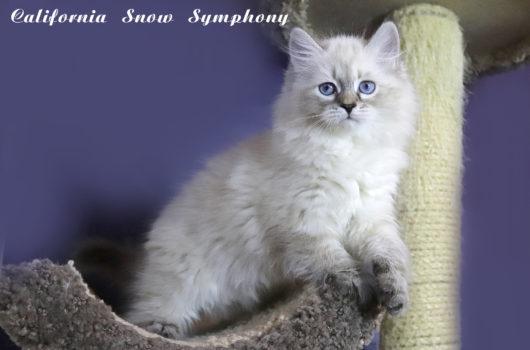 Corianna  Snow Symphony