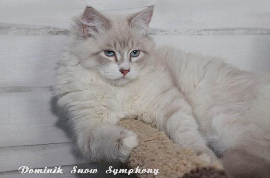 Dominik  Snow Symphony