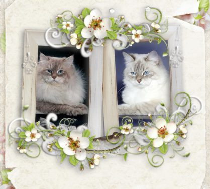 December 27 we were born 5 lovely kittens (E-Snow Symphony)