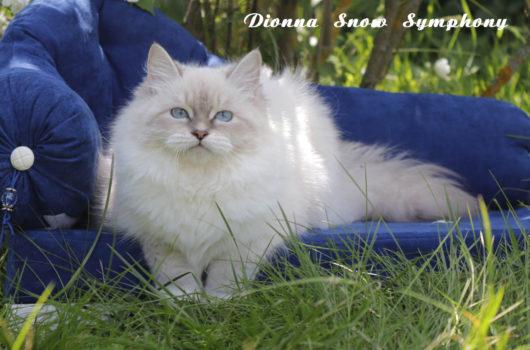 Diоnna Snow Symphony