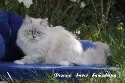 Diyana Snow Symphony
