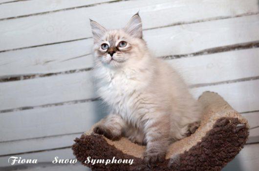 Fiona Snow Symphony