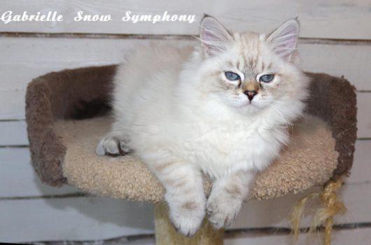 Gabriel Snow Symphony
