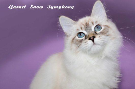 Garnet Snow Symphony