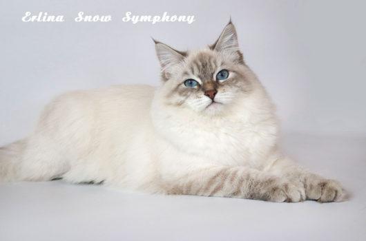 Erlina Snow Symphony