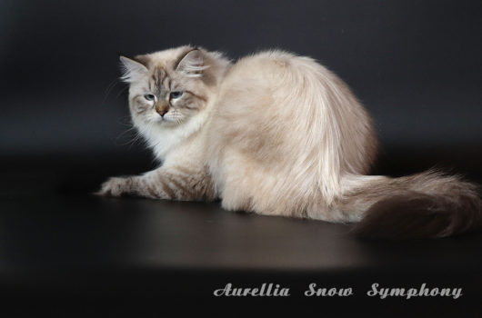 Aurellia Snow Symphony