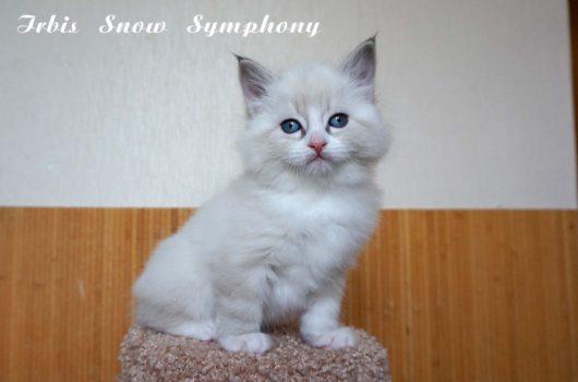 Irbis Snow Symphony