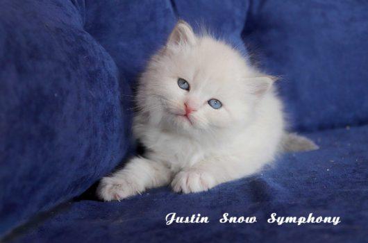 Justin Snow Symphony