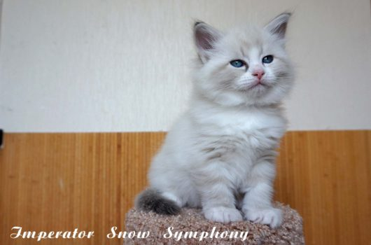 Imperator Snow Symphony