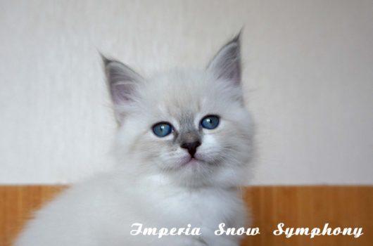 Imperia  Snow Symphony