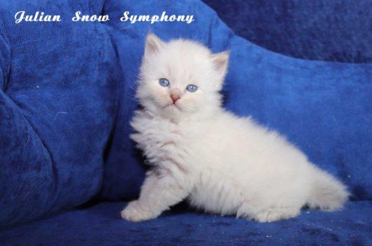 Julian  Snow Symphony