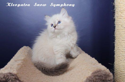 Kleopatra Snow Symphony