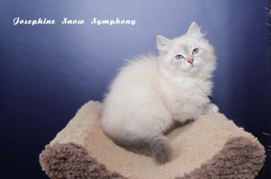 Josephine Snow Symphony