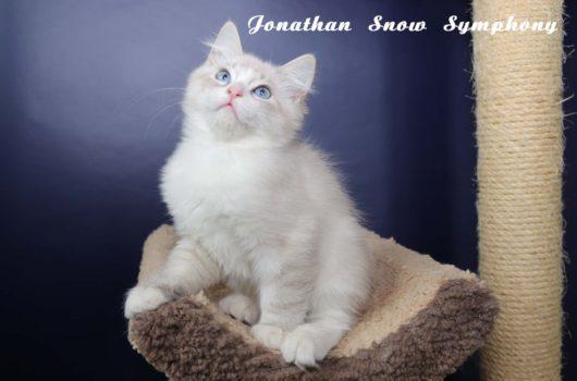Jonathan Snow Symphony