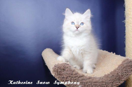 Katherine Snow Symphony